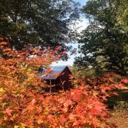 Barn Seasonal Fall 2014